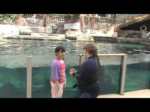 shark with clara the 19yrs old sea lion @ Edmonton Mall