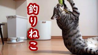 猫じゃらしで遊んであげていたつもりが、本当は遊んでくれていたみたいです( ´∀` )笑 最後は1人置いて行かれて寂しい感じになっちゃいました...