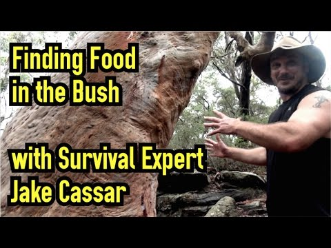 Learning Bushcraft/Bush Tucker/Bush Medicine in Aboriginal Land (Australia) with Jake Cassar