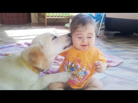 Adorable Babies Playing With Dogs #6 ★ Dogs Babysitting Babies