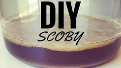How to Make Your Own Scoby from Scratch