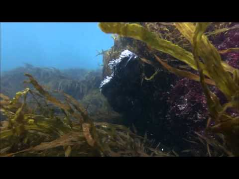 Ocean Odyssey 2010 720p part 1 (HD)