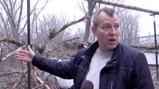 В Новошахтинске от упавшего дерева пострадал житель города Шахты.