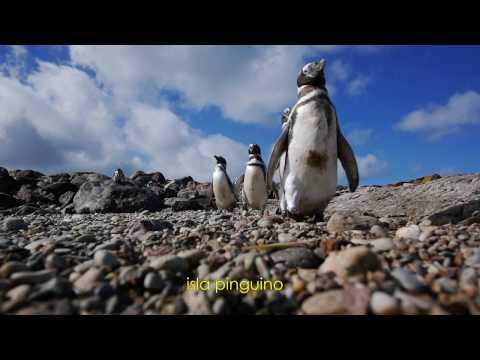 Argentine, Patagonie, Puerto Deseado, île Pinguino