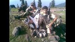 Pheasant hunting in pakistan.avi