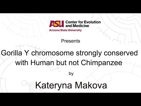 Gorilla Y chromosome strongly conserved with Human but not Chimpanzee | Kateryna Makova | CEM