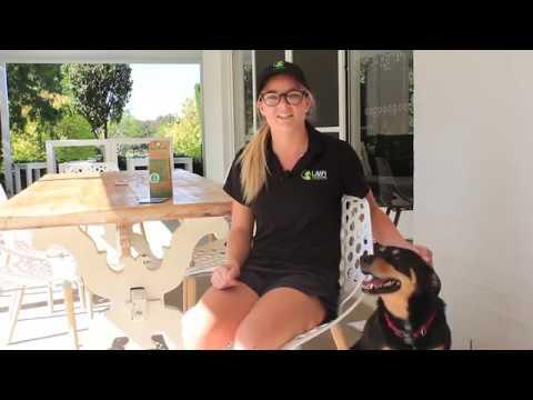 Dog Urine Burns – Help! - Lawn Solutions Australia