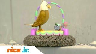 Щенячий патруль | Гнездо орла | Nick Jr. Россия