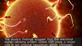 Protein defect leaves sperm swimming in circles: Study