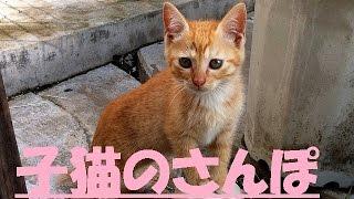 子猫3兄弟のお散歩動画です! とてもオテンバな三匹です!!