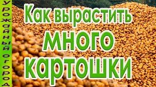 видео Как получить ранний урожай картошки