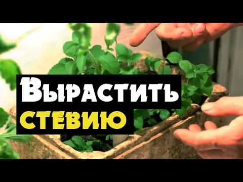 Відео