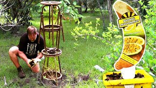 How to Make a Trellis for Banana Passionfruit Using Bar Stools | Upcycling
