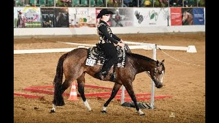 German Online Open - Jungpferde (Basis, Trail und Reining)