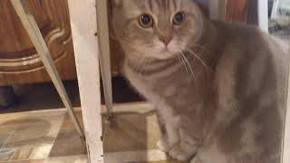 Взорвал интернет Кот говорит Я тебя ЛЮБЛЮ Разговаривает самое милое видео Жрать мама МАаа МАааа