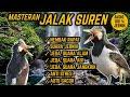 Suara Masteran Jalak Suren Nembak Rapat Jeda Terapi Air Alam Anti Stres  Mp3 - Mp4 Download