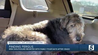 Nashville family reunites with lost dog days after crash
