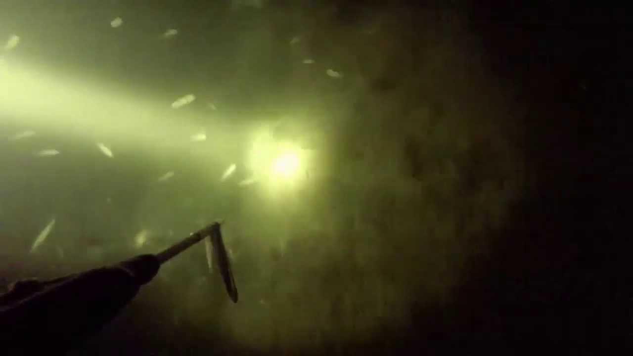 Подводная охота на судака весна 2016  Рыбалка на видео