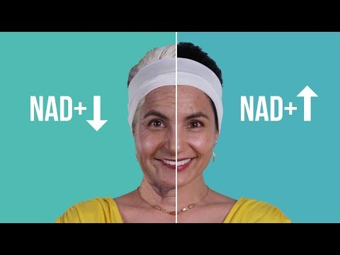 Is NAD+ The Future Of Aging Science?