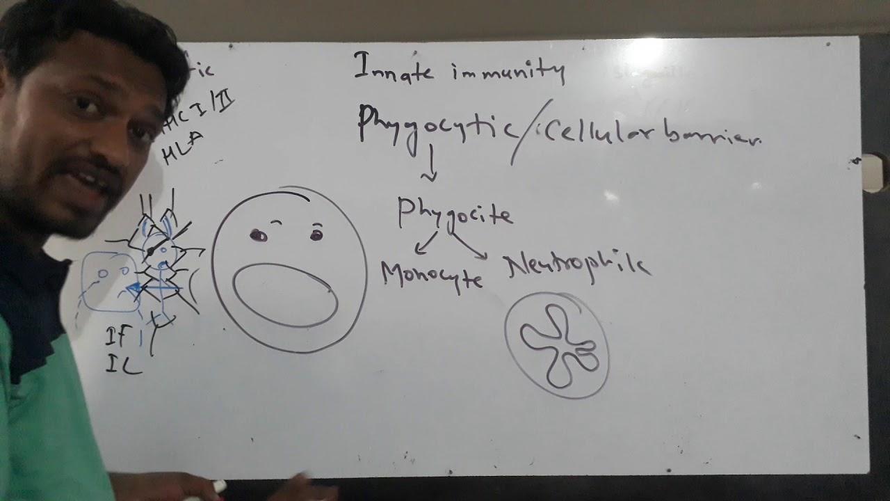 Innate immunity NEET AIIMS JIPMER hindi