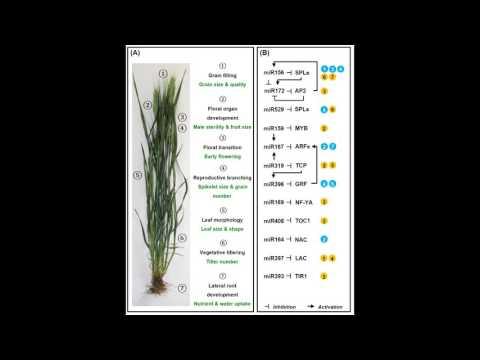 Figure360: Trends in Plant Science, Liu et al., Figure 3