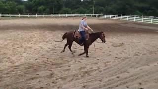Collegiate Equestrian Recruitment Video