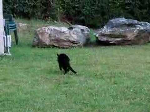 Stupid Black Cat