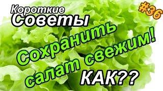 Как сохранить листья салата свежими?