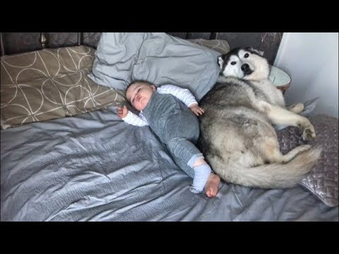 My Baby & Dog didn't want to wake up!!