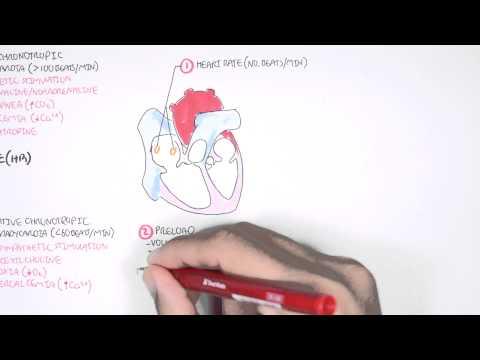 Cardiology - Cardiac Output