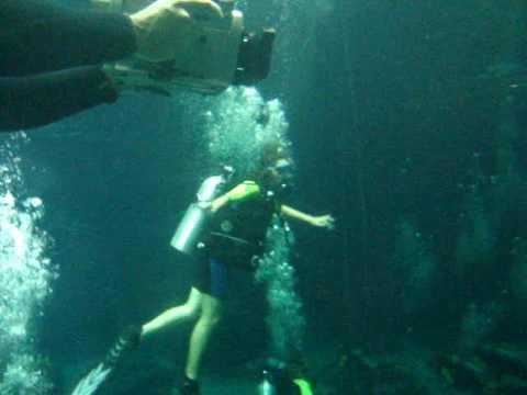 Ali Diving