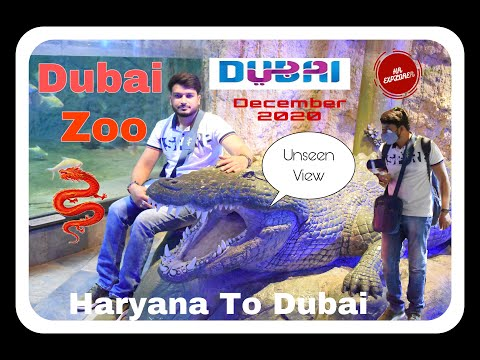 Dubai Underwater Zoo  2020  During Covid-19  Unseen Views   #underwaterzoo #VisitDubai #Covid-19