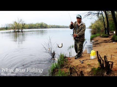 White Bass Fishing @ Nekoosa, WI 2019  EP.2