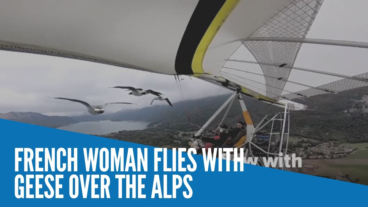Download French woman flies with geese over the Alps