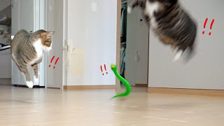 [ENG SUB] The funny reaction of cats who saw a toy snake!