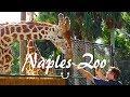 Grandes aventuras no Naples Zoo