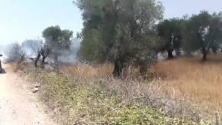 Bruciano le campagne minervinesi