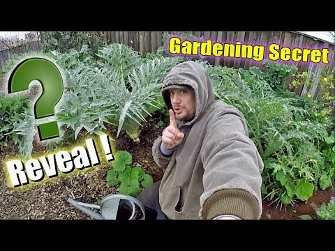 my-secret-garden-fertilizer-revealed!-it's-like-a-gardening-miracle!!