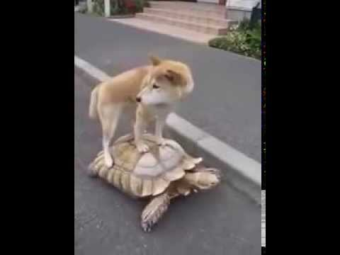 Dog Rides On A Turtle Youtube