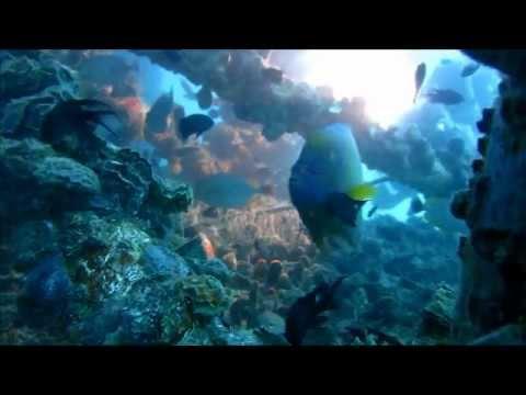 Life under platform: Gulf Of Thailand