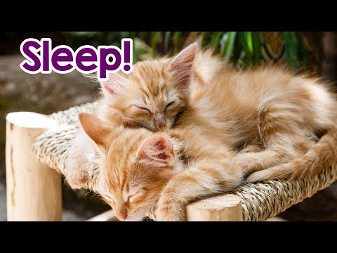 Cat Music! Relaxing Music for Stressed Cats! Relax Your Kitty In Minutes!
