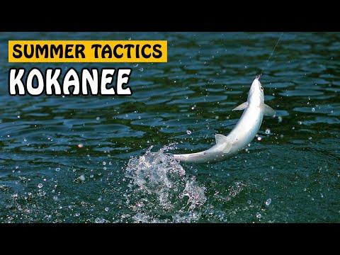 SUMMER KOKANEE SALMON TACTICS | Fishing With Rod