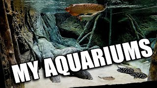 A tour of my aquariums that he