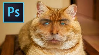 Photoshop Tutorial: Cat with Human Face