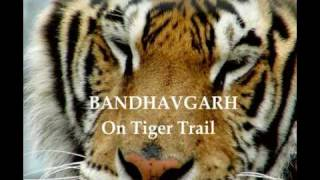 Amazing Tiger Fight at Bandhavgarh National Park - India by Rooms and Menus
