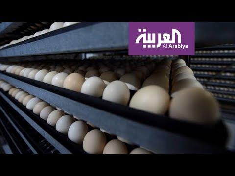 نشرة الرابعة | وفرة البيض في السعودية .. الزراعة تتحدث للعربية  - نشر قبل 4 ساعة