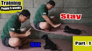 Cara melatih anak anjing untuk duduk..! diam..! dan makan..!