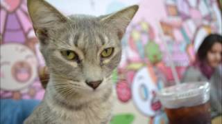 Meow Café - Monterrey