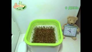 АэроСАД Здоровья КЛАД Микрозелень кресс салат