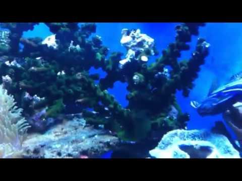 cá cảnh biển của kuki Sơn Trà. TP Đà Nẵng